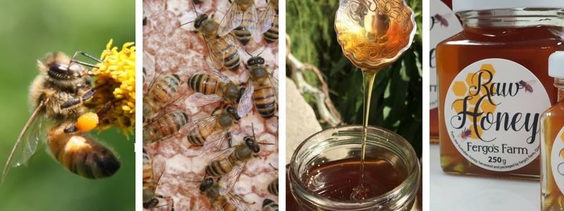 Fergo's Farm Raw Honey