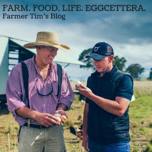 Eggcettera Farm Update