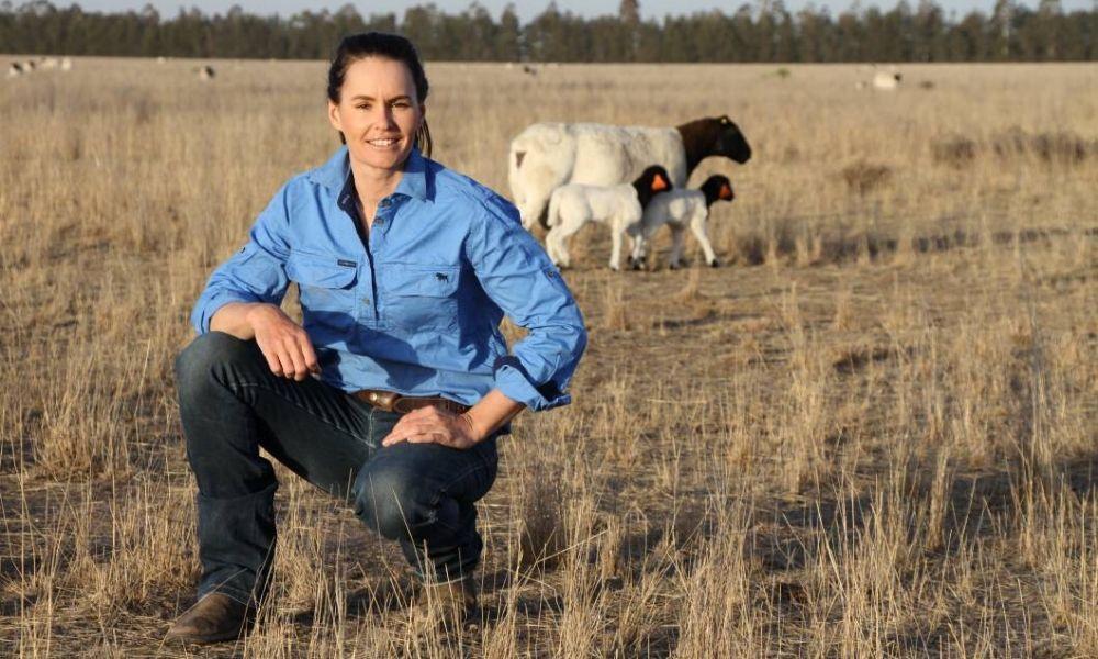 Bellevue Prime Dorper Lamb Sophie Curtis