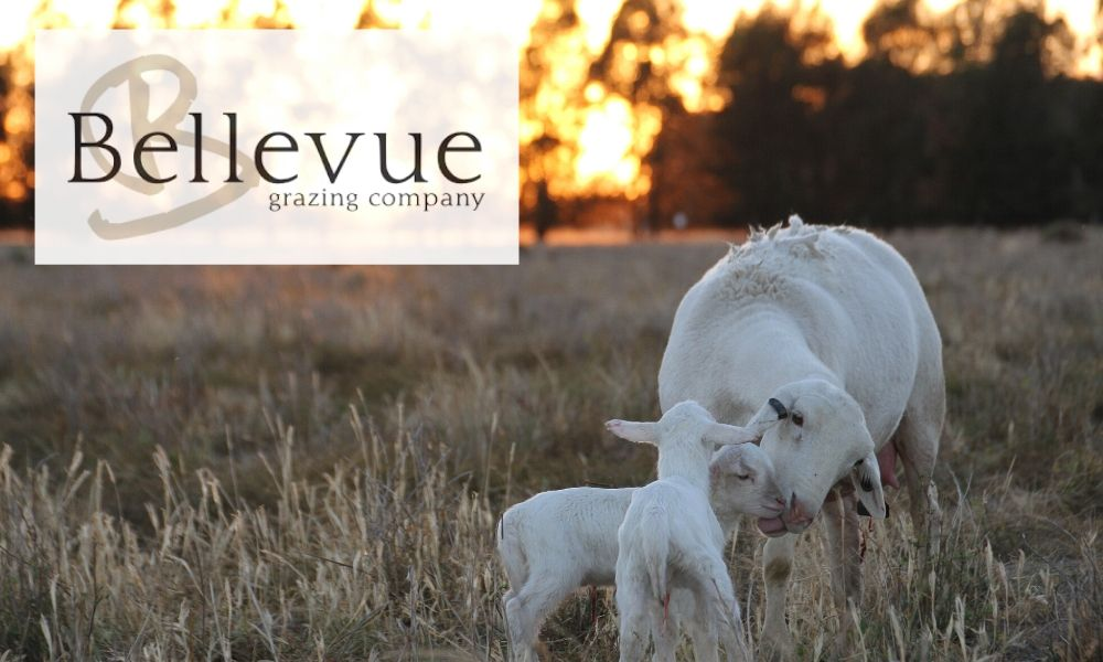 Bellevue Prime Dorper Lamb with logo sunset 2
